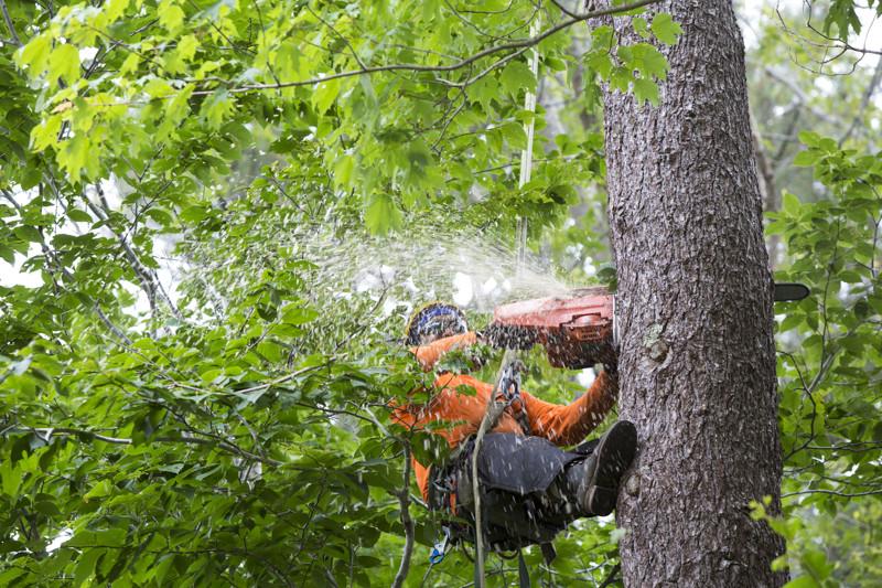 Tree Service Saint Louis